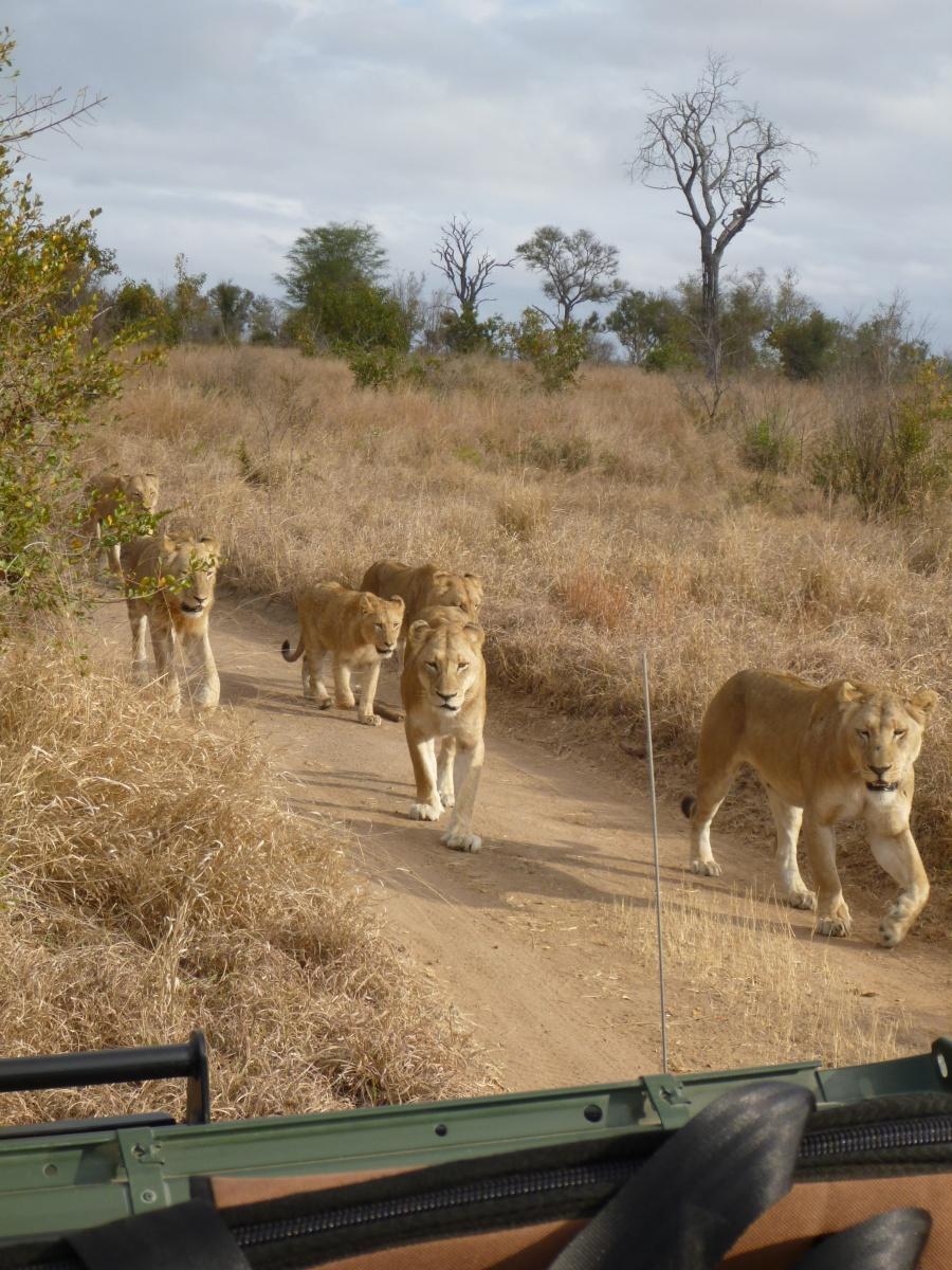 South Africa: Sabi Sabi Game Reserve