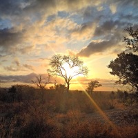 South Africa: 5 Must Do's for a Perfectly Luxe Safari Experience (Bikini.com)